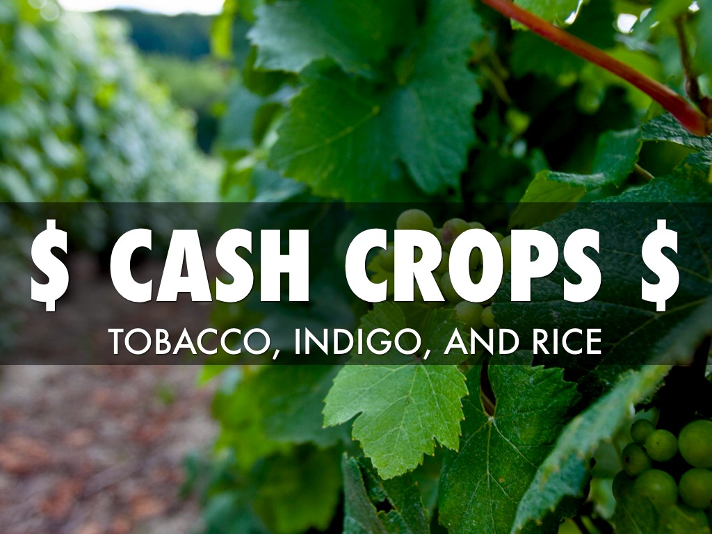 cash crops Crops sold on markets ('cash crops') are an integral part of strategies to improve  food security at farm household level in developing countries.